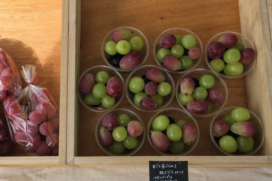 2018-grape-marche
